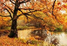 Jesień chmurny krajobraz starej jesieni dębowy drzewo blisko stawu w chmurnej jesieni pogodzie Obrazy Royalty Free