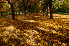 Jesień cień, Vigeland park Zdjęcia Royalty Free