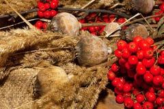 jesień cisawy dekoraci winogron Październik granatowa drewno Fotografia Royalty Free