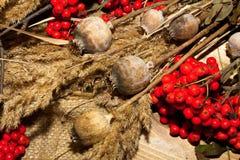 jesień cisawy dekoraci winogron Październik granatowa drewno Obrazy Stock