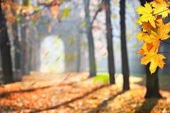 Jesień Colonade zdjęcia stock
