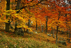 jesień coloured Fotografia Royalty Free