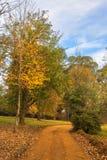 Jesień coloured liście na ziemi Obrazy Stock