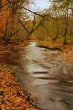 jesień colours zdjęcie stock