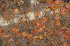 Jesień czasu tło zdjęcia stock