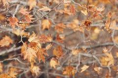Jesień czasu tło obraz stock