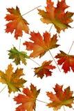 jesień czerwieni prześcieradło Obrazy Royalty Free