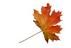 jesień czerwieni prześcieradło Zdjęcie Stock