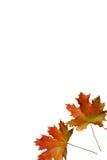 jesień czerwieni prześcieradło Zdjęcie Royalty Free