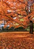 Jesień czerwonego koloru liście w Japonia fotografia stock