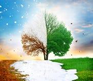 jesień cztery rnwinter sezonu wiosna lato drzewo obraz royalty free