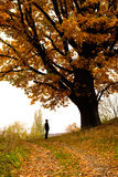 jesień dąb Fotografia Stock