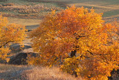 Jesień dąb na zboczu Zdjęcie Stock
