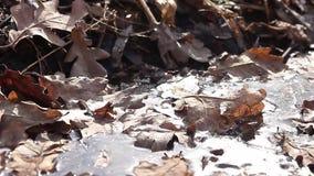 Jesień dąb opuszcza tło teksturę Spadać ulistnienie sezonowy abstrakt fotografujący zakończenie starzy jesień liście na zdjęcie wideo