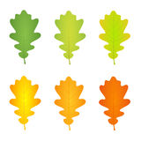 Jesień dębu liść Zdjęcia Royalty Free