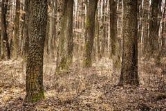 Jesień deciduous las, brązu filtr, sezonowa natura Obrazy Royalty Free