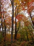 Jesień Deciduous las z zieleni, koloru żółtego i czerwieni liśćmi, fotografia royalty free