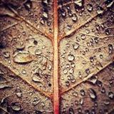 Jesień deszcz Obrazy Royalty Free