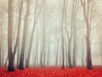 Jesień dezerterował parka w mgłowej pogodzie - jesień krajobrazowy jesień mgłowy park widok Fotografia Stock