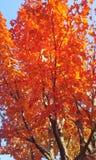jesień dof liść czerwieni płycizna Zdjęcie Royalty Free