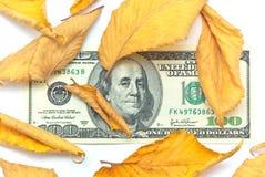 jesień dolara liść fotografia stock