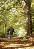 jesień drewna zdjęcia royalty free
