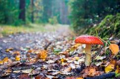 jesień drewno obraz royalty free