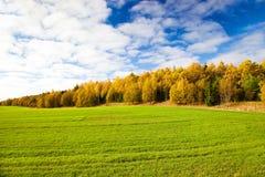 jesień drewno Obraz Stock