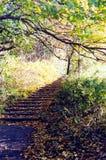 jesień droga przemian obrazy stock