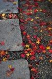 jesień droga przemian Obraz Royalty Free