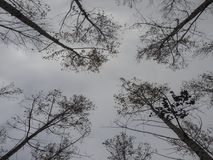 Jesień drzewa oddolny widok obraz royalty free