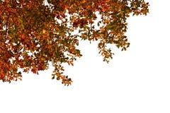 Jesień drzewa tło zdjęcia royalty free