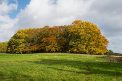 Jesień: drzewa z jesień kolorami Zdjęcie Royalty Free