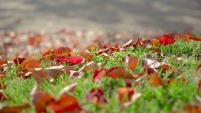 Jesień drzewny fiszorek