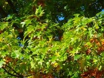 jesień drzewo Fotografia Royalty Free