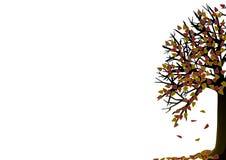 jesień drzewo Zdjęcia Stock
