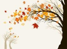jesień drzewo Zdjęcie Royalty Free