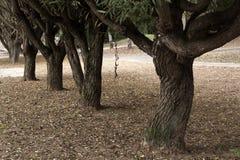 jesień drzewo płynnie tafluje drzewa wizerunku park Fotografia Stock