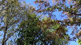 jesień drzewo płynnie tafluje drzewa wizerunku park zbiory wideo