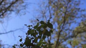 jesień drzewo płynnie tafluje drzewa wizerunku park zdjęcie wideo
