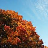 Jesień dzień Zdjęcie Royalty Free