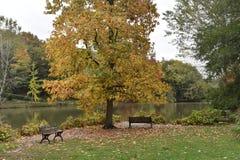 jesień dzień jeziorny pogodny widok Obrazy Stock