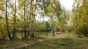 Jesień dzień na brzeg jezioro Fotografia Royalty Free
