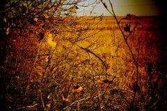 Jesień dzień na polu Obrazy Royalty Free