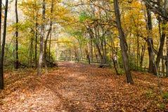 Jesień dzień w drewnach Fotografia Stock