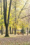 Jesień dzień w parku z spadać liśćmi i drewnianą ławką Obrazy Stock