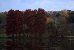 Jesień dzień w Tineretului parku, Rumunia zdjęcie stock