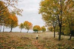 jesień dziewczyny trochę park pathway zdjęcia stock