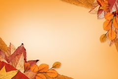 8 jesień eps kartoteka zawierać liść wzoru wektor Zdjęcie Royalty Free