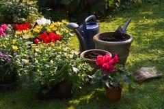 jesień flowerpots uprawiają ogródek nowe rośliny Obrazy Royalty Free